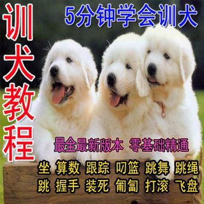 全套训犬视频教程一点通金毛泰迪马犬德牧专业训练养狗狗视频大全